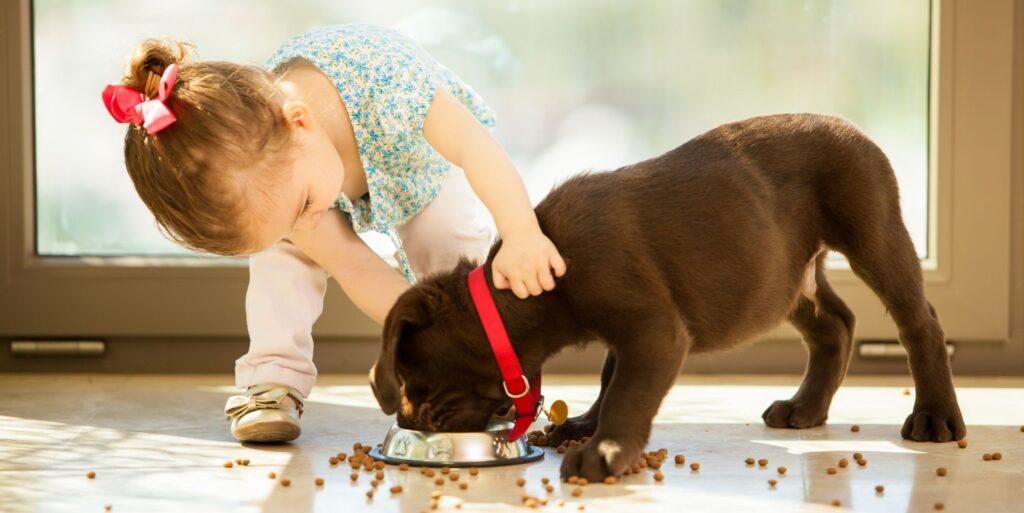 טיפול עם כלבים
