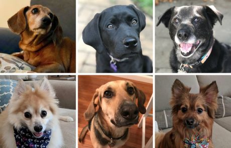 מדריך לאימוץ כלבים – סוגי זנים של כלבים