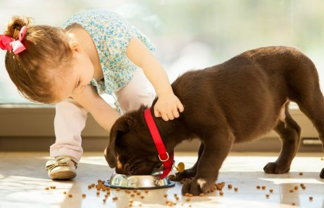 החיבור בין כלבים וילדים